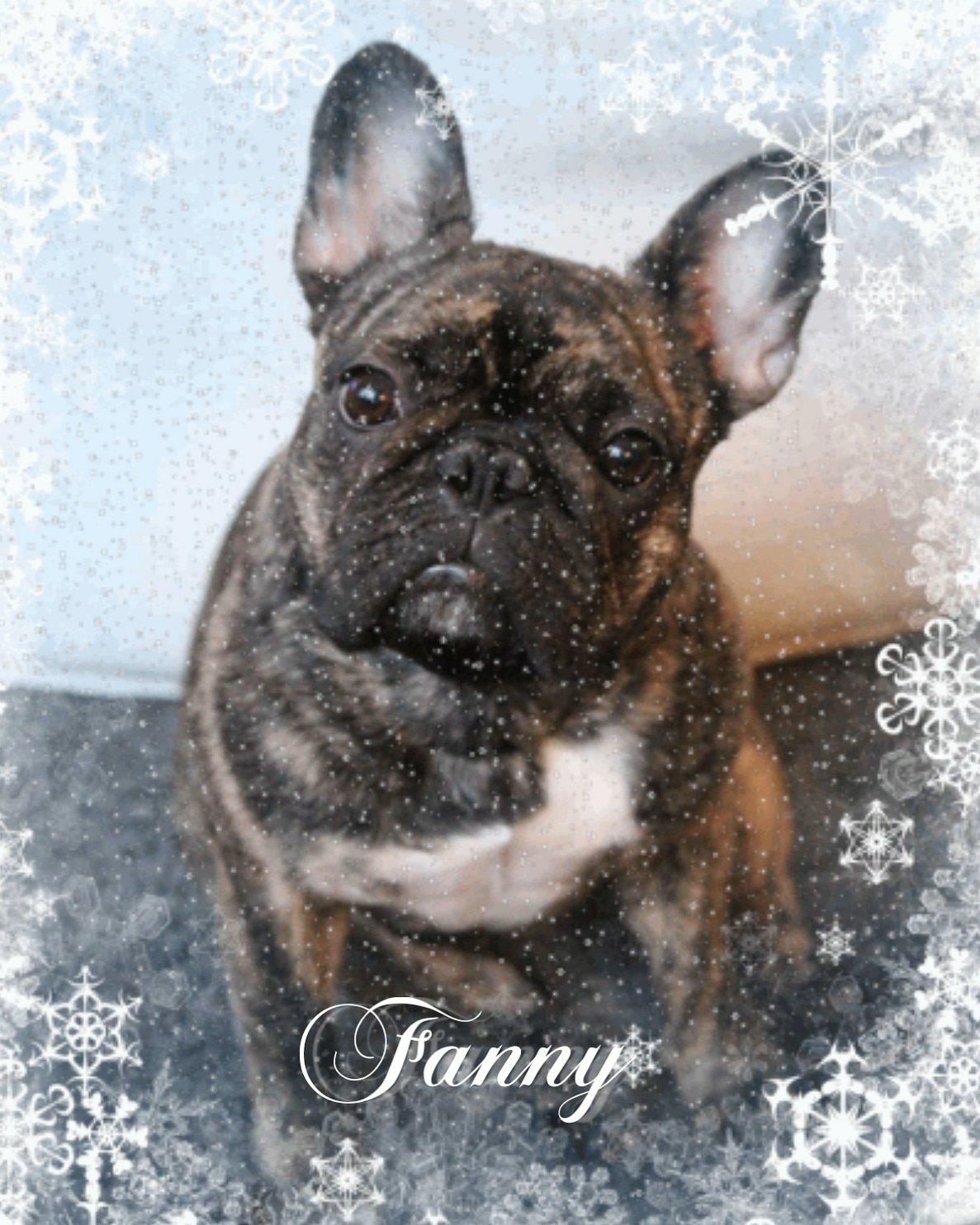Fanny joulutunnelmissa